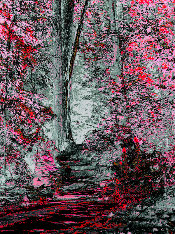 Fantasy Path Digital Photo by Joe Hoover